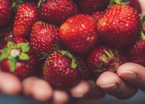 Regional Food Distribution Asssociation – Let No One Go Hungry